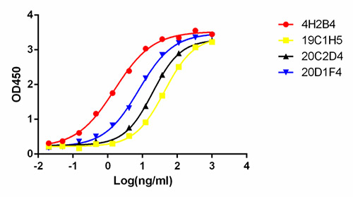 N-protein IgM mAbs are high affinity, with EC50 range between 12 – 37 ng/ml.