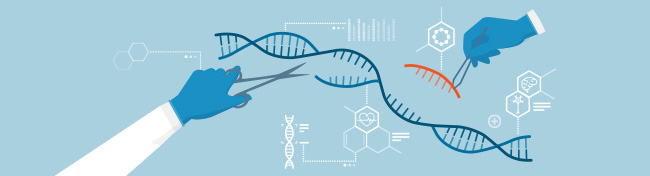 CRISPR in Animal Model Generation -  Functionalizing Genome Editing for a Broad Range of Targets