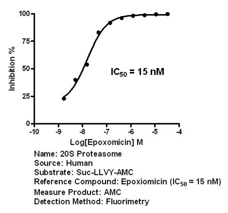 20S Proteasome