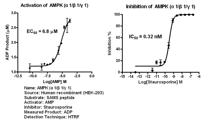 AMPK111 assay setup