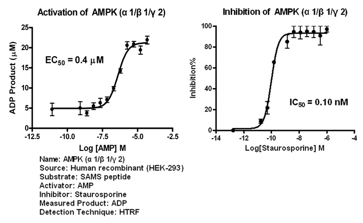 AMPK112 assay setup