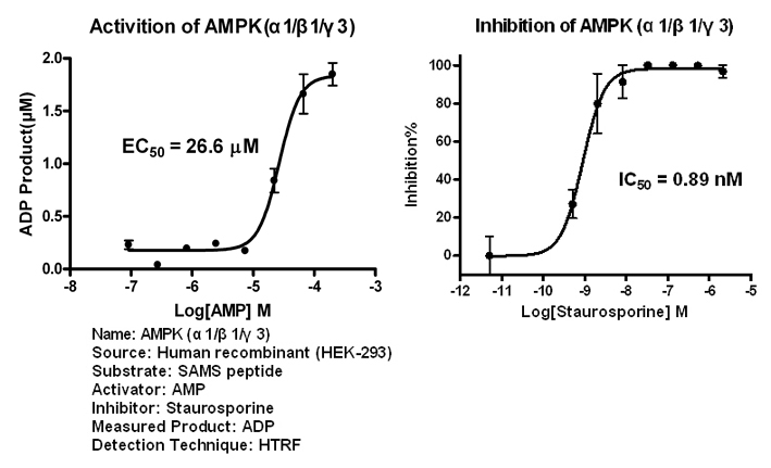 AMPK113 assay setup