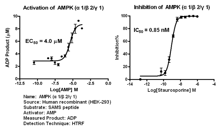 AMPK121 assay setup