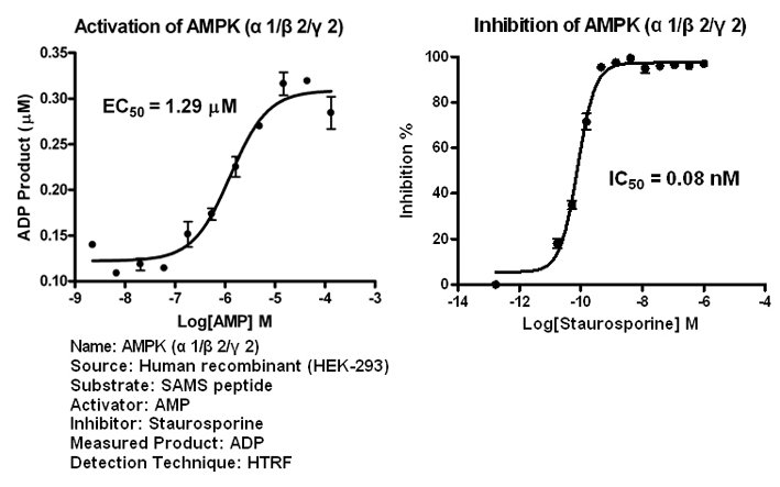AMPK122 assay setup