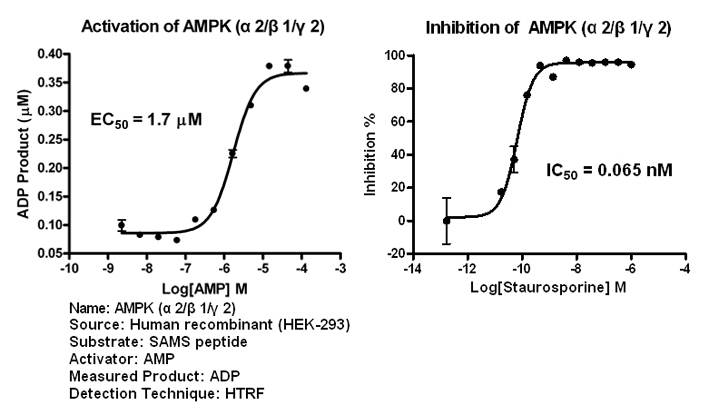 AMPK212 assay setup