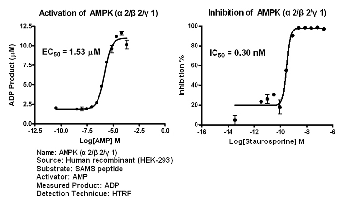 AMPK221 assay setup