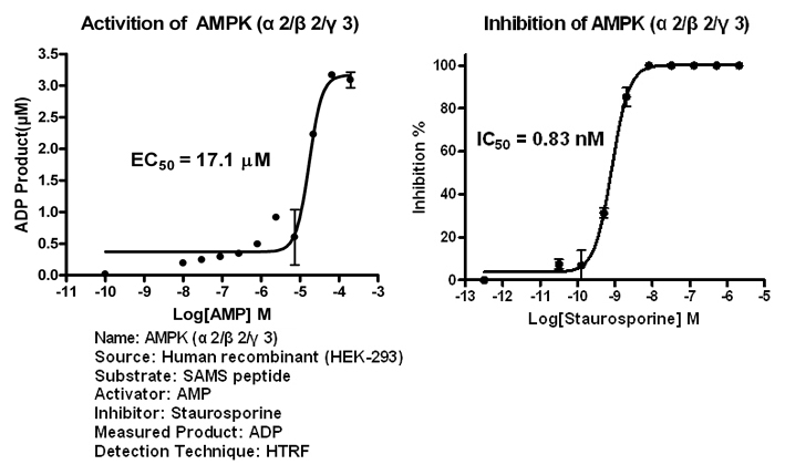 AMPK223 assay setup