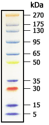 Broad Multi Color Pre-Stained Protein Standard