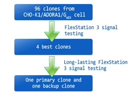 Selection of clones