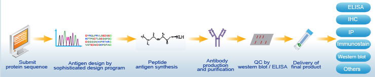 antigen design and antibody produce