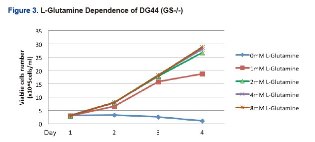 L-Glutamine Dependence of DG44(GS-/-)
