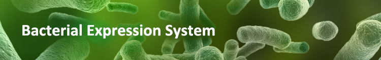 Protein Expression & Purification in Bacterial System