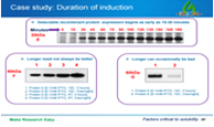 Optimize protein expression overview