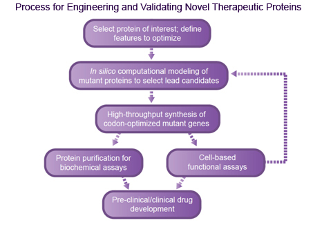 Therapeutic Protein Engineering