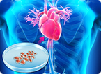 Epithelial Derived Stem Cell Therapy for Cardiac Infarction