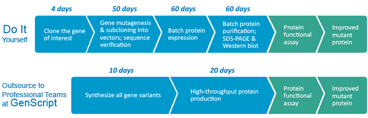 High throughput Protein Variants Service Flowchart