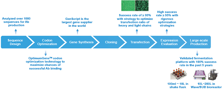 Large-scale Recombinant Monoclonal Antibody Production