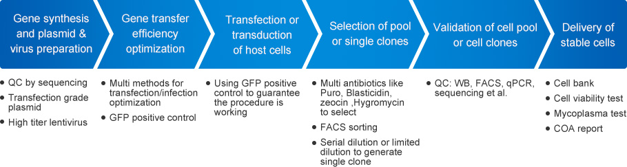 Stable Cell Line Services for Assay Applications