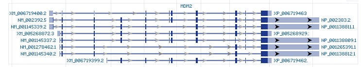 MDM2 gene Genomic sequence