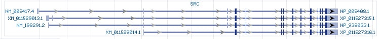 SRC gene Genomic sequence