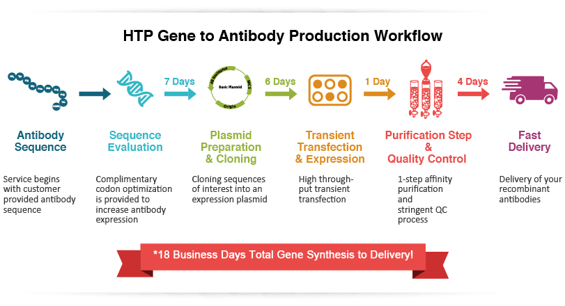 High Throughput Antibody Purification Services