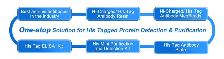 His tagged protein detection & purification