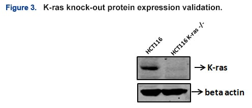 CRISPR KO Cell Line Case Studies