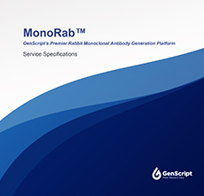 MonoRab™ Antibody service Specifications