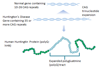 Peptides in Huntington's Disease