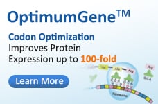 OptimumGene™ Codon Optimization