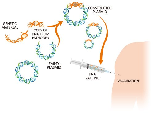 influenza vaccines essay The flu vaccine cannot cause flu because it is made with  please use one of the following formats to cite this article in your essay, paper or report: mla .
