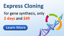 promo box custom gene synthesis