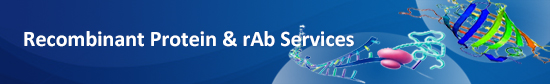 Recombinant Protein & rAb Services