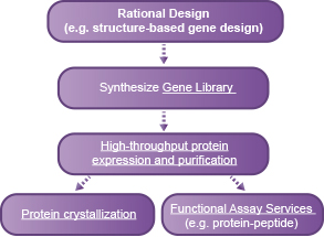 Rational Design of novel proteins