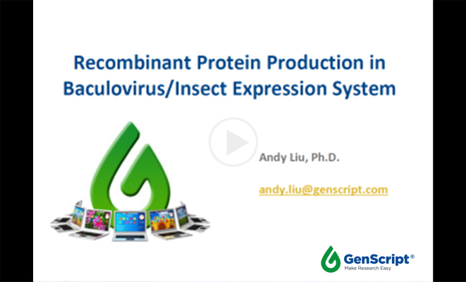 Recombinant protein production