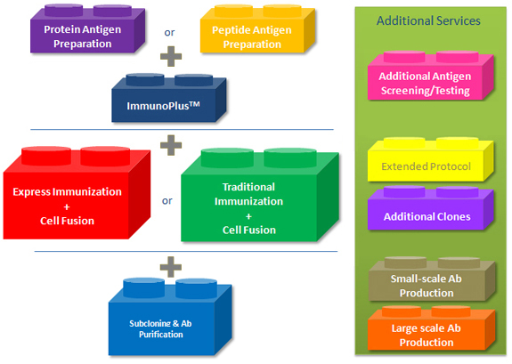 Semi-custom Monoclonal Antibody Production Services Illustration