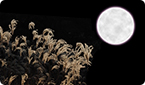 plant biology, insect pollination, full moon, pollen release