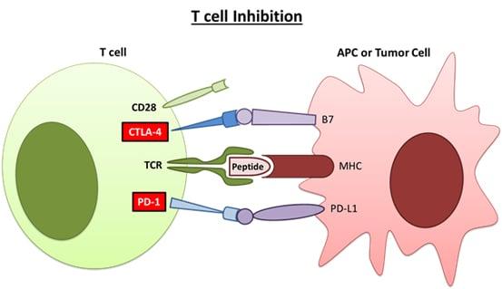Immune Checkpoint Inhibitors-GenScript