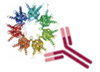 Transient expression of recombinant protein & antibody