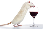 Alcoholism, addiction, neural pathways, amygdala neurons