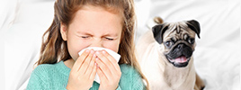 A new approach for treating your allergies to dogs or cats