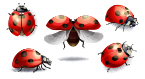 ladybugs, deployable devices, medical devices