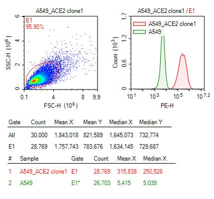 Anti-Flag  antibody to detect ACE2-Flag