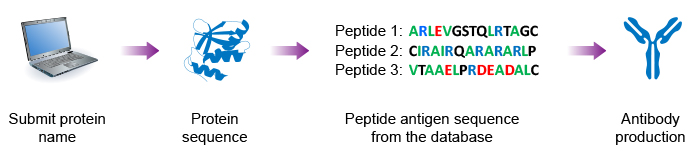 search the peptide antigen sequence