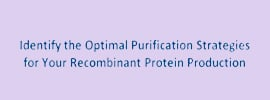Identify the optimal protein purification strategy for your recombinant protein production