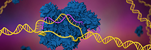 CRISPR in Creating Knockin Cell Lines and Animal Models  - Functionalizing Genome Editing for a Broad Range of Targets