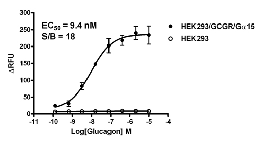 HEK293/GCGR/Gα15 Stable Cell Line