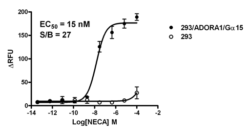 293/ADORA1/Gα15 Stable Cell Line