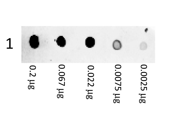 Goat Anti-Mouse IgG (H&L) [RPE],pAb