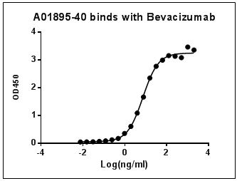 MonoRabᵀᴹ Anti-Bevacizumab Antibody (30E1), MAb, Rabbit
